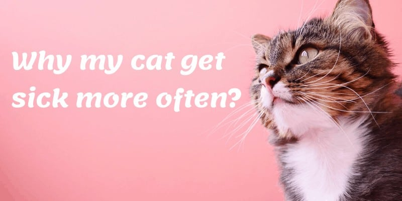 common disease in cats and possible symptoms