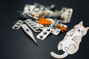 diabetes is a common disease in cats