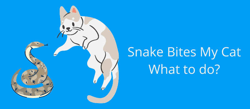 How Long After a Snake Bite Will a Cat Die?
