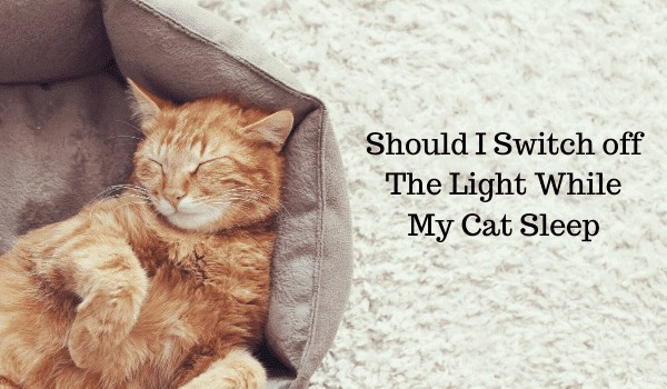 Should I Leave a Light on for My Kitten at Night?