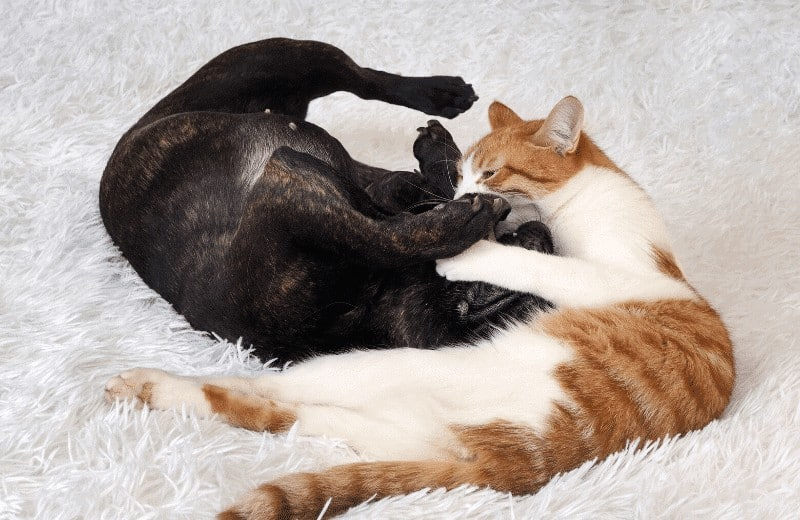 why does cat bite dog's neck