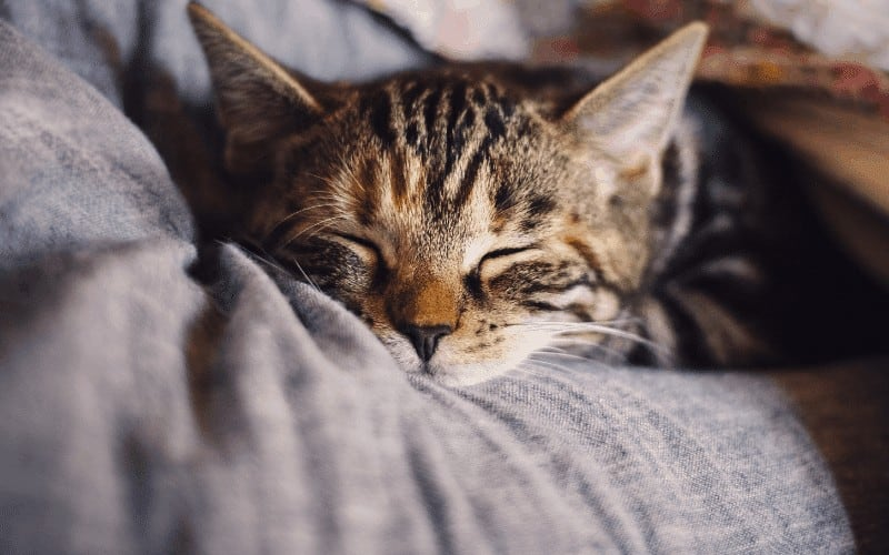 How to stop a cat snoring