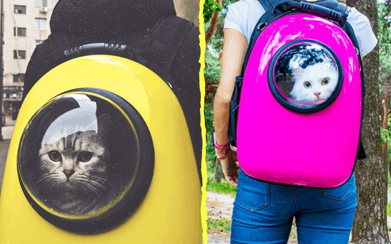 clear cat career backpack