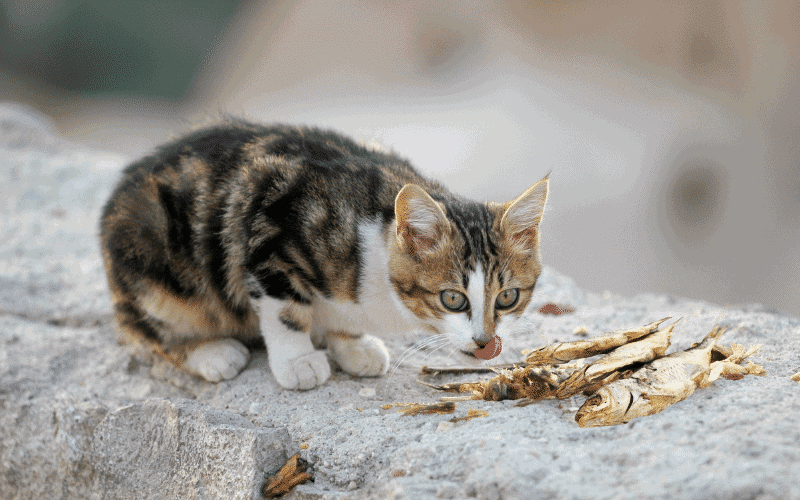 is dried fish good for cats