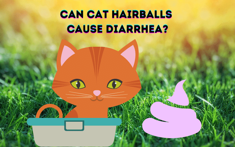 Can Cat Hairballs Cause Diarrhea