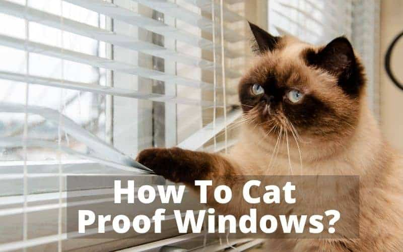 How To Cat Proof Windows