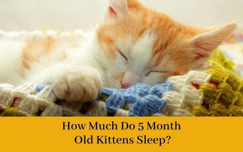 How much do 5 month old kittens sleep?