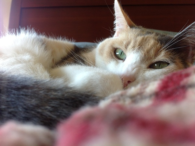 do calico cats shed more