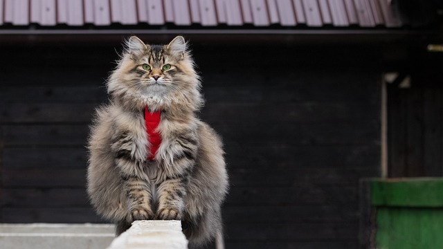 why are siberian cats so expensive